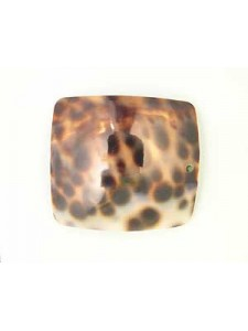 Cowrie Shell Rectangle