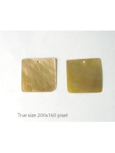 Brownlip Shell 20mm Square